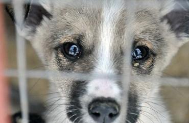 Побил собаку и снял на видео: лишение свободы до 8 лет!